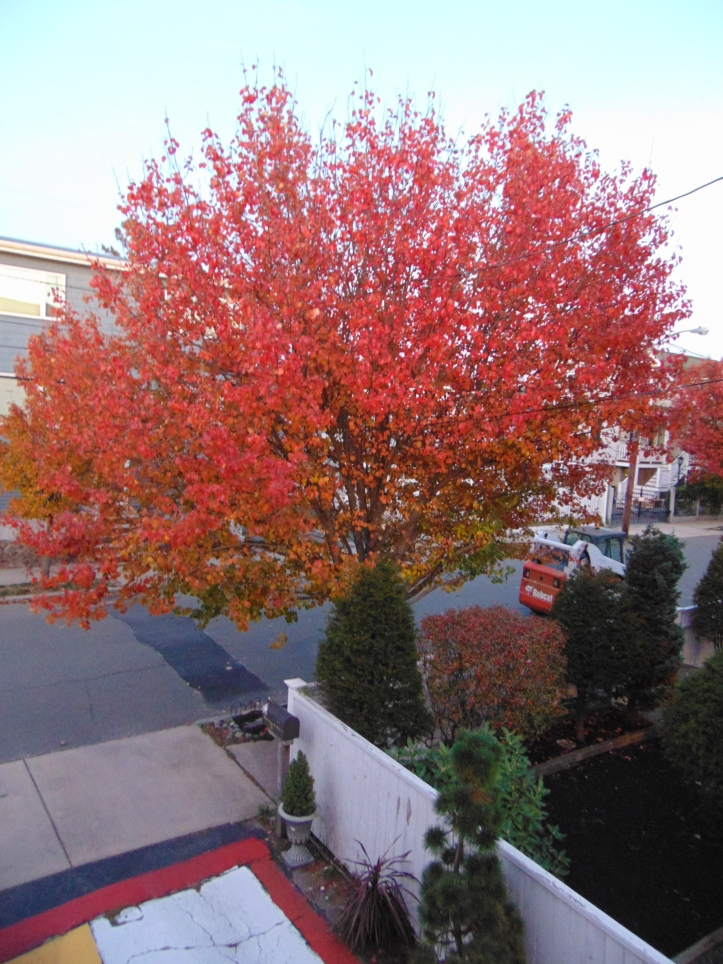 autumn red out my door POP