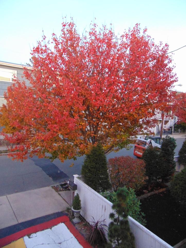 autumn red out my door POP